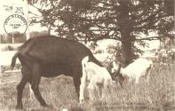 49-st-laurent-les-vigneaux